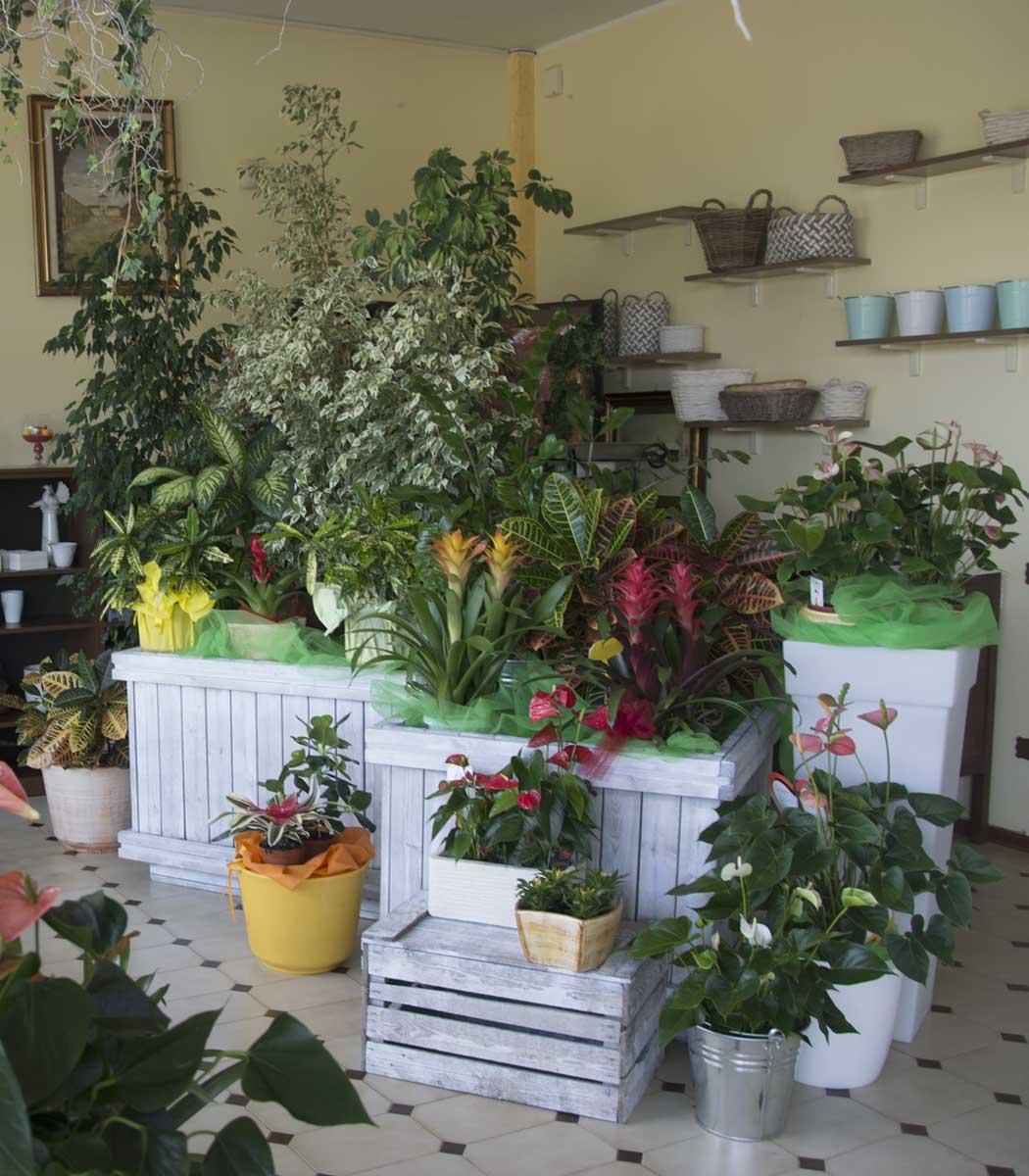 Punto Vendita Floricoltura Salami